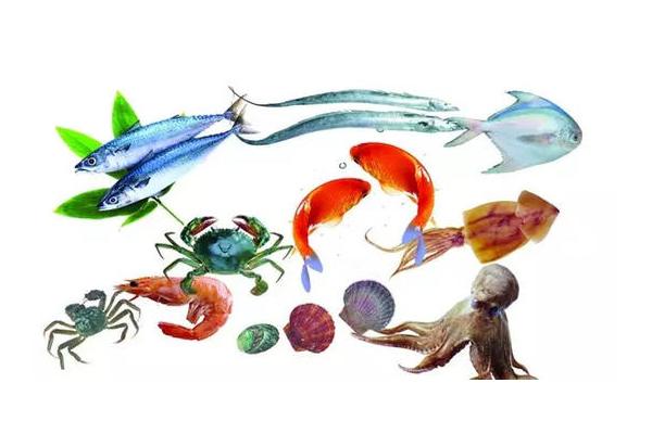 淡水鲨鱼有几种_哪些鱼类及海鲜更适合宝宝吃呢?-童装网