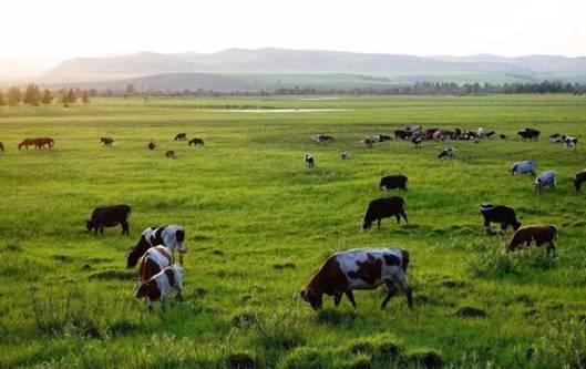 君樂寶乳業鉆研適合自己的養牛之道,生產高質量好奶粉