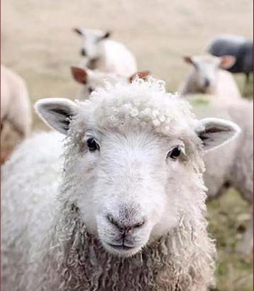 可瑞康,致力于宝宝早期营养研究的羊奶粉领导者