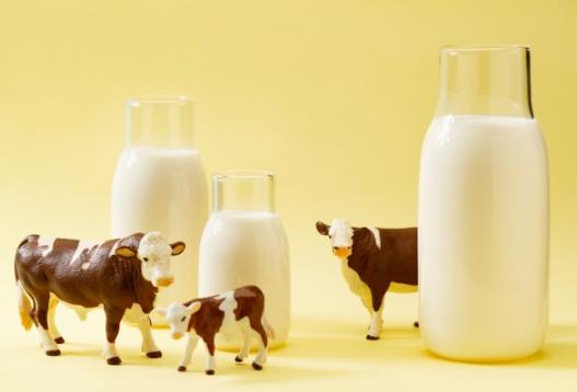 """疫情下的奶業:上游奶農大量倒奶 下游消費者奶粉""""斷糧"""""""