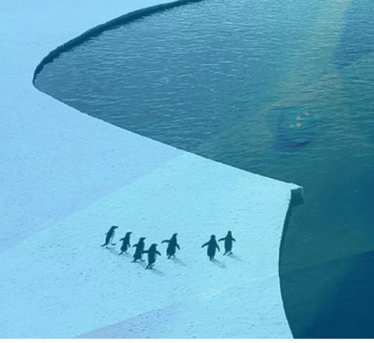 迪迪鹿童裝 一場不愿醒的夢-南極之旅(文末有驚喜)