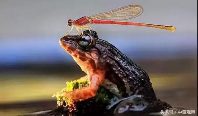 博士蛙童装:苦熬十几年,放弃在黎明前